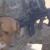 ΒΙΝΤΕΟ: Βοηθώντας τα σκυλιά του πολέμου
