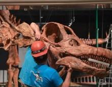 Ενας τιτανόσαυρος στο Μουσείο της Νέας Υόρκης -Ο μεγαλύτερος στον κόσμο, προκαλεί τρόμο
