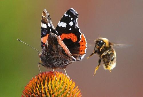 Οι μέλισσες και οι πεταλούδες προκαλούν παγκόσμια ανησυχία για κατάρρευση του πλανήτη